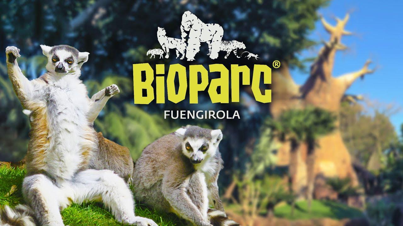 Bioparc Fuengirola - Que ver en Fuengirola durante tu escapada